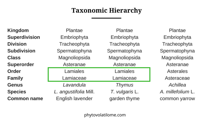 taxonomic hierarchy