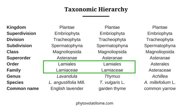 taxonomic hierarchy
