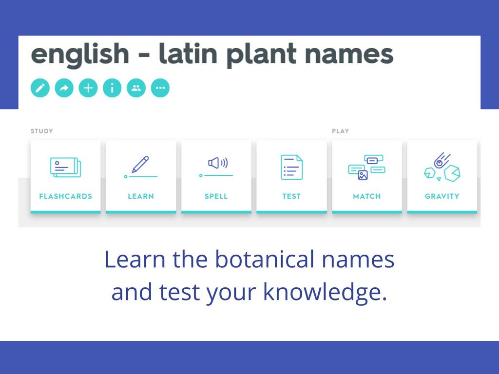 english latin aromatic plant names