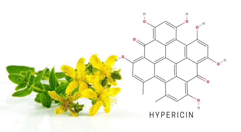 hypericin hypericum hydrolat hydrosol